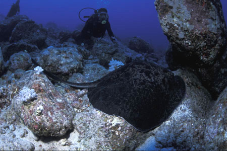 Holt Rock diving spot